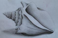Shell - Pencil