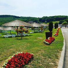Waiting for us. #Figa #Transilvania #Romania #summer #sun #green