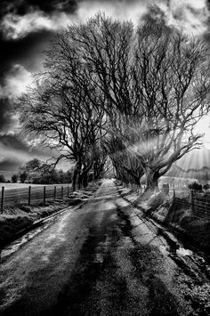The Dark Hedges by Gavin Byrne on 500px