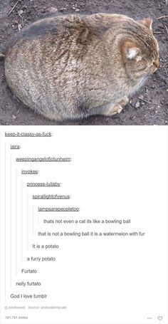 Cat Posts On Tumblr That Are Impossible Not To Laugh At Https - 20 cat posts on tumblr that are impossible not to laugh at