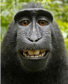 Most beautiful monkey face