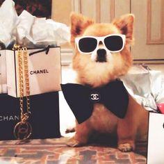 EstiloDF » ¡Los perros ricos de Instagram!