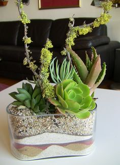 Succulents in a Vase
