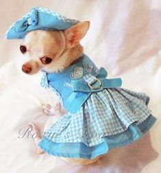 Puppy Love Dog Harness Dress 3 Piece Set - Dress, Hat and Leash Chihuahua Clothes, Cute Chihuahua, Puppy Clothes, Cute Puppies, Cute Dogs, Chihuahua Names, Dog Love, Puppy Love, Dog Clothes Patterns