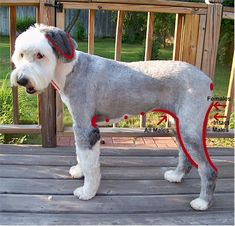 Sheepadoodle Haircut English Sheepdog Old English Sheepdog Sheepdog
