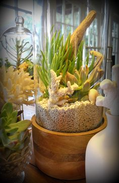 """This large coastal terrarium is 6.25"""" in diameter and 15"""" high. Beautiful mango wood base with high quality glass."""