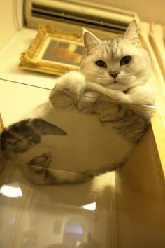 Cat from underneath