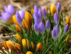 Beautiful purple and yellow spring flowers Yellow Spring Flowers, Beautiful Flowers, Purple, Plants, Roses, Touch, Heart, Display, Pink