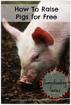 How To Raise Pigs For Free*