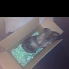 Bella box
