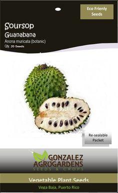 Soursop Anonna muricata Guanabana 20 Seeds Packet