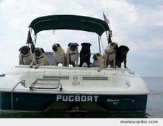 Pug Life Boat
