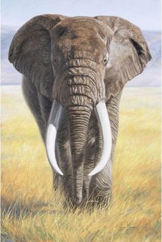 Canvas Art by Lucie Bilodeau is part of Elephant painting Power Of Nature Canvas Print by Lucie Bilodeau All canvas prints are professionally printed, assembled, and shipped within 3 4 business - Wildlife Paintings, Wildlife Art, Animal Paintings, Animal Drawings, Paintings Of Elephants, Elephant Face, African Elephant, Elephant Canvas, Elephant Images