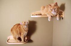 corner bookshelves wall mount | Cat Climber cat perches, wall mounted, hand made, superb craftsmanship ...