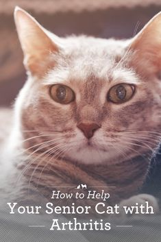 How to Help Your Senior Cat Cope with Arthritis Cat Care Tips, Dog Care, Pet Tips, Calming Cat, Outdoor Cat Enclosure, Cat Health, Health Care, Health Tips, Cat Ages