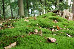 Foto von einem moosbedecktem Waldboden