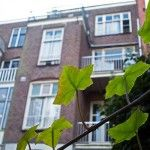 Hostel annemarie in Amsterdam. Take a look at this hotel if you have a small budget, find out if there are still any available rooms. Hostel, Amsterdam, Budgeting, Budget Hotels, Europe, Plants, Flora, Plant