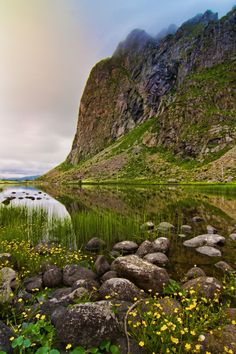 Lofoten green, Eggum / Norway (by Veronica).