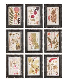 Look what I found on #zulily! Colorful Botanical Framed Wall Art - Set of Nine #zulilyfinds