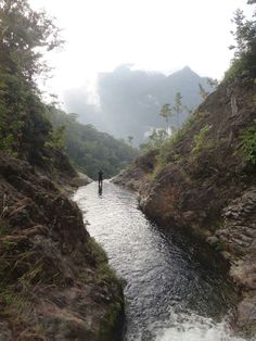 Pico Bonito National park,Honduras.