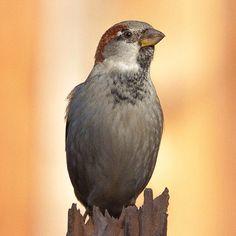 #Igbirds #extremebird #birdfreaks #global_hotshotz #jaw_dropping_shots #rsa_nature #igaddicts #igdaily #instagood #igers #ignation #jj #udog_member #teg #photooftheday #bestest_of_the_day #bestoftheday #instamood #instagram_masters #instadaily #gmy #clubsocial #gang_family #primeshots #all_shots #best_pics #canon #lightroom