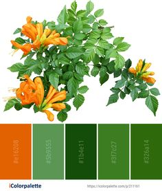 Color Palette Ideas from Flower Plant Orange Image Orange Palette, Orange Color Palettes, Colour Pallette, Colour Combo, Colour Combinations, Color Pop, Color Schemes, Flower Colour, Color Feel