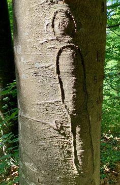 Baum geritzt# Rinde geritzt# Foto# Interessant was man an Bäumen so findet. Plants, Pictures, Kinetic Art, Contemporary Art, Sculptures, Tree Structure, Plant, Planets