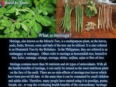 Zija is the moringa company..