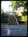 Paris Montmartre  ©MilenaP