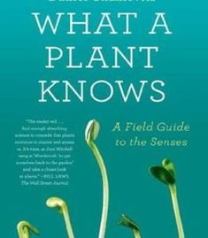 What A Plant Knows: A Field Guide To The Senses PDF