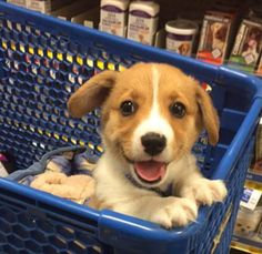Wich way to the shmacKos aisle plz : rarepuppers