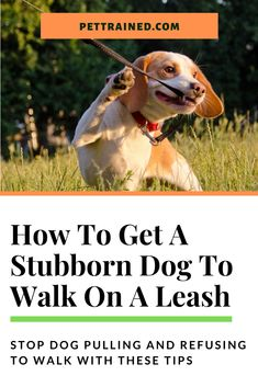 Dog refusing to walk? Is your dog stubborn and refusing to leash walk? Walking with your dog can be quite an enjoyable experience, but if your dog is stubborn and refuses to go for a walk or be calm on the walk, the experience can quickly turn into a frustrating one for both of you. Learn how to get a stubborn dog to walk on a leash without pulling and understand the proper techniques on how to leash train a dog here. #dogtraining #puppytraining #leashtraining #looseleashwalking #dogpulling… Therapy Dog Training, Training Your Puppy, Dog Training Tips, Puppy Training Schedule, Hyper Dog, Excited Dog, Reactive Dog, Dog Health Tips, Leash Training