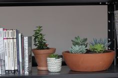 Simplee | lifestyle | home plants