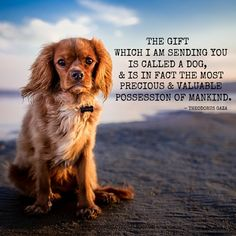 Dog Quote - The Gift of a Dog