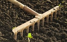 Stop tilling and save the world? Maybe - here is the big reason why you should switch to no-till gardening.