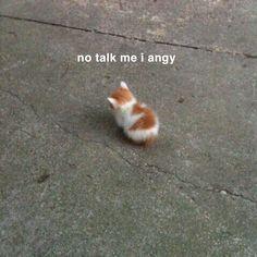 Cute Love Memes, Really Funny Memes, Stupid Funny Memes, Funny Relatable Memes, Haha Funny, Funny Cute, Cute Cat Memes, Funny Stuff, Cute Funny Animals