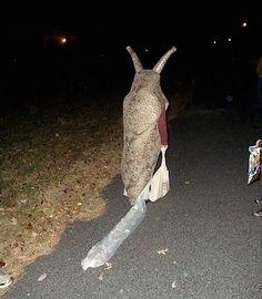 Eine traurige Schnecke auf'm Weg nach Hause. Im Dunkeln. Nach einer wilden Nacht. Haha, irgendwie ist das Kostüm schon etwas gruselig aber irgendwie auch extrem lustig. | unfassbar.es