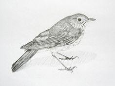 https://mayandmaynot.files.wordpress.com/2012/04/bird.jpg