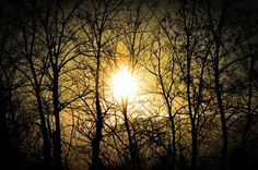 Bosque Hortsavinyà. Por Anna Jarque Abizanda.