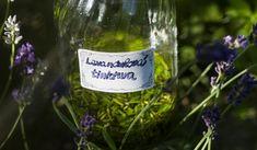 Jak vyrobit a využít levandulovou tinkturu Vodka, Wine, Bottle, Alcohol, Flask, Jars