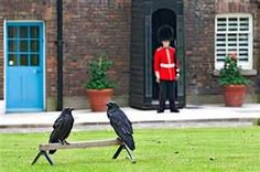 Liffey chats with the Ravens at the Tower of London in THE MYSTERY OF THE SPARKLING SOLO DRESS CROWN