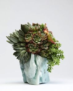 Succulents Cactus, with modern vase