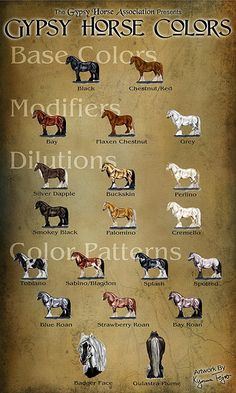 draft Horse Colors
