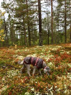 Autumm in Sweden 🇸🇪