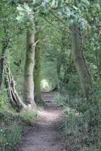03-10-14 - Britain's Best Getaways - Constable Country Suffolk and Essex (dedham woodland)