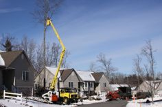 """Green Alliance """"tree whisperer"""" Micum Davis of Cornerstone Tree Care has some great hints on successful winter pruning, read about it here: http://www.greenalliance.biz/blog/archives/201401/winter-pruning-helps-protect-trees-facing-new-threats%C2%A0"""