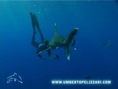 Umberto Pelizzari & Sea Life