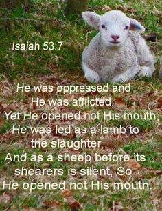 Like sheep we have all wandered about, Each has turned his own way, And Jehovah has caused the error of us all to meet up with him. He was oppressed and he let himself be afflicted, But he would not open his mouth. He was brought like a sheep to the slaughter, Like a ewe that is silent before its shearers, And he would not open his mouth .Isaiah 53:6-7