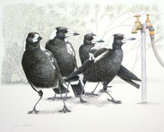 Magpies -Is there water - Janet Matthews