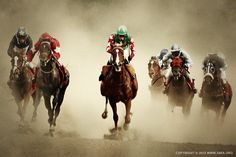 Racing Horses I by 54ka [photo blog] animals Photography Image Photo racing horse i 01 by 54ka winner win victory track thoroughbred success sport speed run rival riding rider Ride racing racetrack Race quick power outdoors motion jockey horseback horse selection horse gamble gallop fast equine equestrian dust Derby course competitor competition compete colorful blurry blurred blur background animal action Abstract